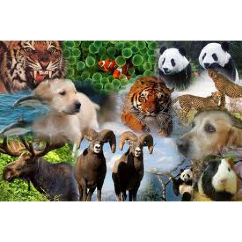 Combinación de Esencias de Animales