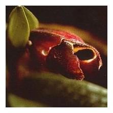 Esencia Orquídea Recuerdos