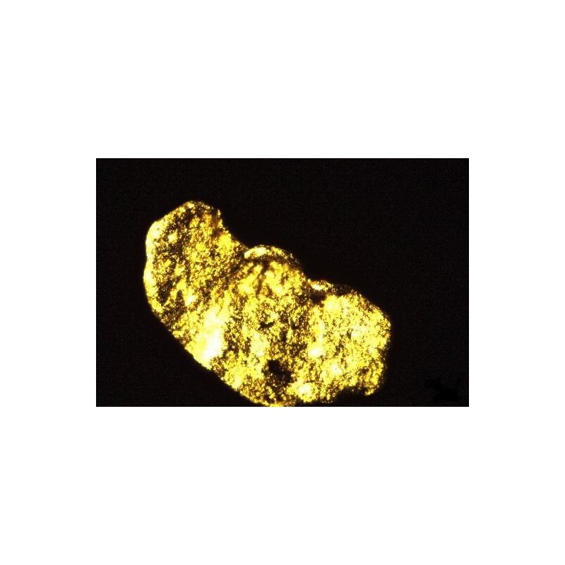 Esencia de Oro