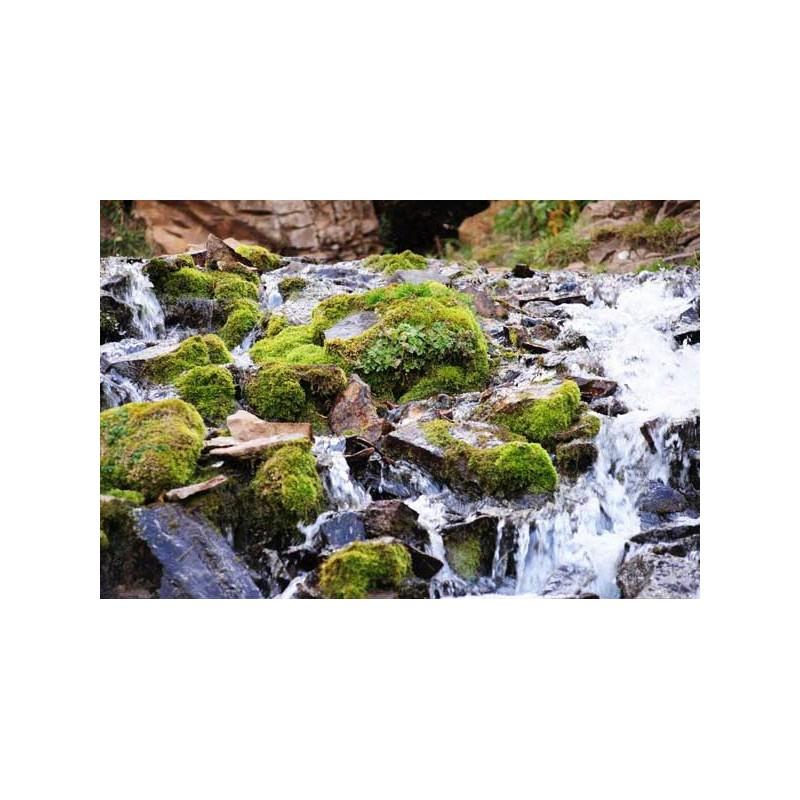 Esencia de Agua de Roca